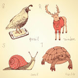 Sketch fancy animals alphabet in vintage style Stock Photo