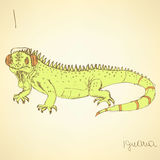 Sketch fancy iguana in vintage style Royalty Free Stock Photography