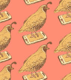 Sketch fancy quail in vintage style Stock Photography