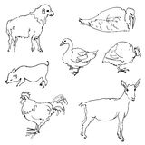 Sketch of  farm animals Stock Photography