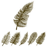 Sketch feathers Stock Image