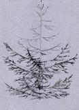Sketch of fir-tree Stock Photo