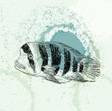 Sketch of a fish Royalty Free Stock Photos