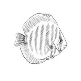 Sketch of a fish Royalty Free Stock Images