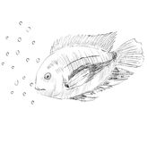 Sketch of a fish Stock Photography