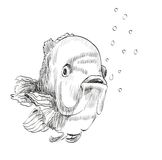 Sketch of a fish. Vector illustration with hand drawn realistic  fish Royalty Free Stock Photos