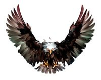 Painted flight bird bald eagle in front royalty free illustration