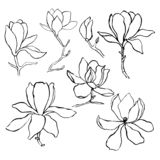 Sketch floral botany collection. Magnolia flower drawings.  Modern single line art, aesthetic contour. Black and white with line a vector illustration