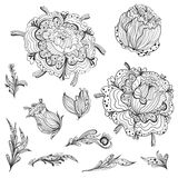 Sketch Floral Design Elements Royalty Free Stock Image