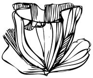 Sketch of flower buds on a white background Stock Images