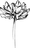 Sketch of a flower with large petals Royalty Free Stock Image