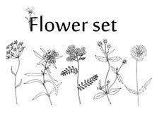 Sketch Flower set Stock Image