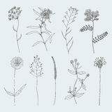 Sketch Flower set Stock Photography