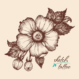 A sketch of a flower in vintage style. Stock Photo