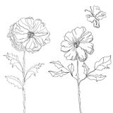 Sketch with flowers. Universal template for greeting card, web page, background Stock Images