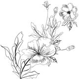 Sketch with flowers Royalty Free Stock Photos