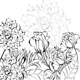 Sketch with flowers Stock Images