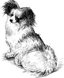 Sketch of a fluffy lap dog. Hand drawing of a cute purebred toy dog vector illustration