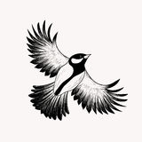 Sketch flying bird. Hand drawn vector illustration . Eng Royalty Free Stock Photo