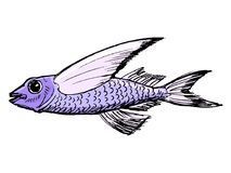 Sketch of flying fish Royalty Free Stock Photos