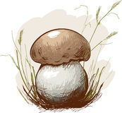 Sketch forest mushroom in the grass. Royalty Free Stock Images