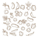 Sketch of fresh farm vegetarian vegetables Royalty Free Stock Image