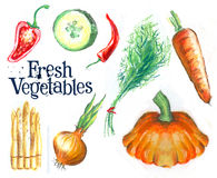 Sketch. fresh vegetables on white background Stock Photo