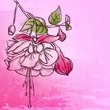 Sketch  Fuchsia background Stock Photos