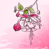 Sketch  Fuchsia background Royalty Free Stock Photo