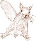 Sketch of a funny forest squirrel Royalty Free Stock Images