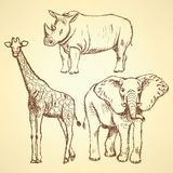 Sketch giraffe, elephant, rhino, vector background Stock Photography