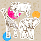 Sketch giraffe, elephant, rhino, vector background Stock Images