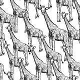 Sketch giraffe, vector vintage seamless pattern Royalty Free Stock Image
