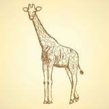 Sketch giraffek, vector vintage background Royalty Free Stock Images