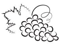Sketch of grape vector illustration