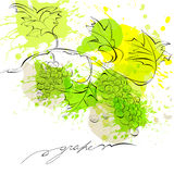 Sketch of grapes Stock Photo
