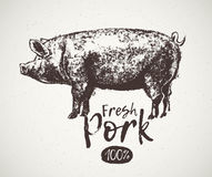 Sketch graphical pig. Graphical pig and inscription, hand drawing illustration stock illustration