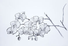 Sketch graphics gel pen orchids Royalty Free Stock Photos