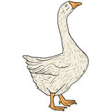 Sketch grey goose on a white background. Vector illustration. Stock Photography