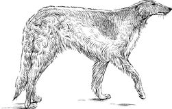 Sketch of a greyhound Royalty Free Stock Photography