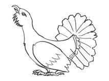 Sketch of  grouse bird Stock Photos