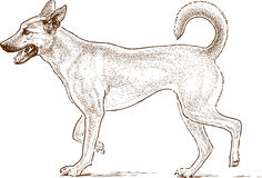 Sketch of a guard dog Royalty Free Stock Image