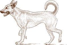 Sketch of a guard dog. Vector drawing of a walking dog Royalty Free Stock Image