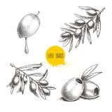 Sketch hand drawn olives set. Olive fruit with oil drop, boneless olives and olive branches with leaves. Vector illustration. Isolated on white background Royalty Free Stock Photos