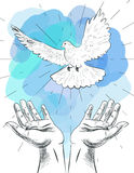 Sketch of hands let go dove of the world. Symbol of peace. Illustration of freedom and world without war Royalty Free Stock Image
