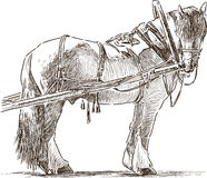 Sketch of a harnessed workhorse stock illustration