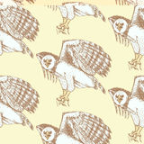 Sketch harpia eagle head in vintage style. Vector seamless pattern Stock Image