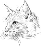Sketch of head cat Royalty Free Stock Images