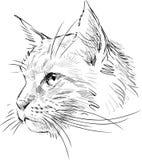 Sketch of head cat royalty free illustration