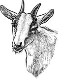 Sketch of the head of a domestic goat royalty free illustration
